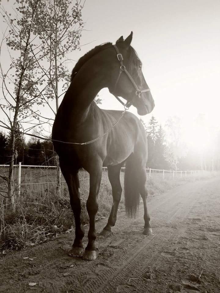 trav veterinär botnia hästklinik